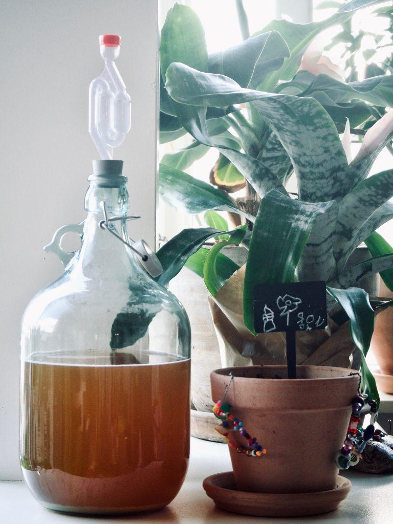 Urte te der fermenterer